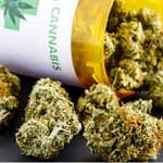 Marijuana-Effects-and-Abuse